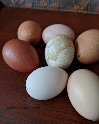 Hollow egg shells