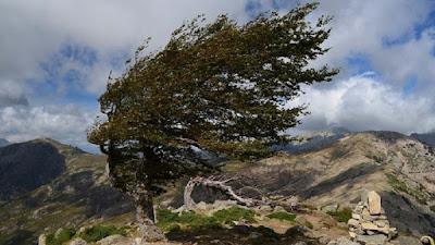 BMKG: Kecepatan Angin di Sumbar hingga 60 Kilometer Per Jam, Waspada Pohon Tumbang