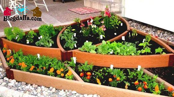 Kebun sayur rumahan