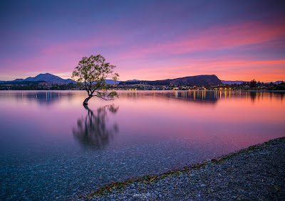 Sunrise, Wanaka, Lake Wanaka, That Wanaka Tree