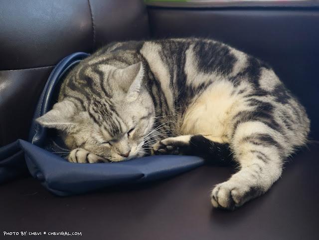 IMG 9159 - 台中北區│樂珈琲 Tano CAFE,隱藏在中友百貨後方的老宅咖啡,還有可愛店貓超療癒!