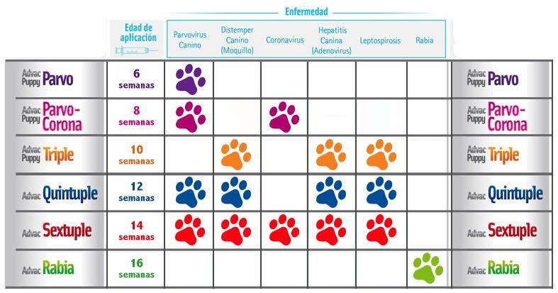 Calendario Vacunas Perros.Animal Friend Calendario Vacunacion Perro Y Gato