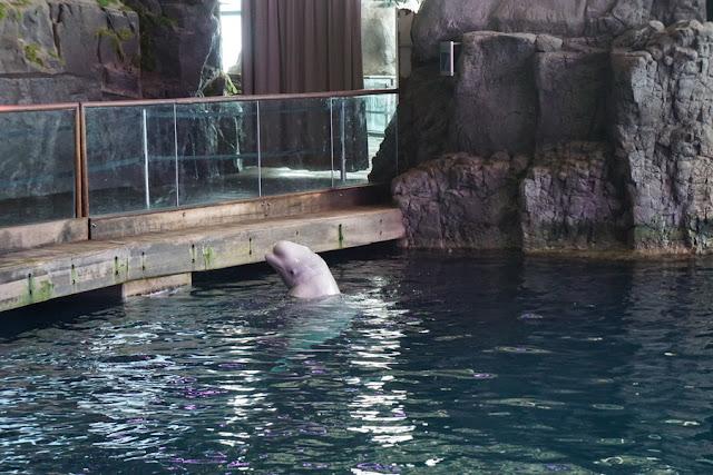 Shedd Aquarium Chicago CityPASS