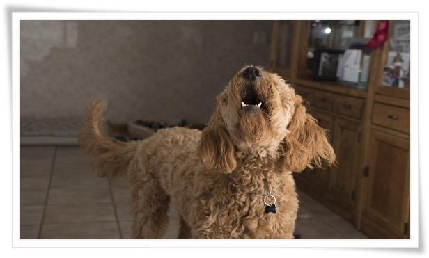 how to stop a barking dog next door