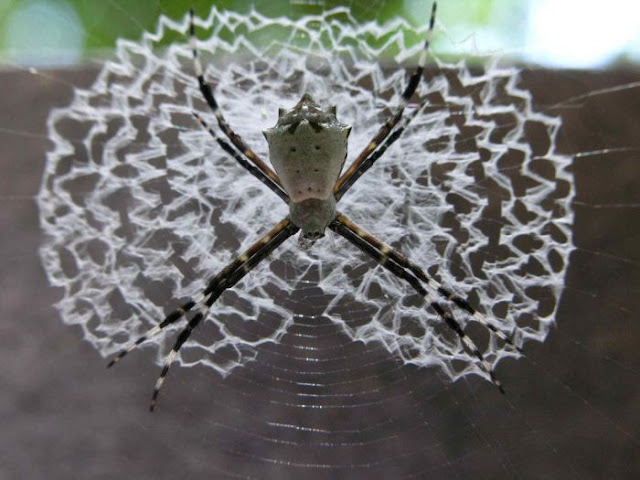 Beautiful spider web p...