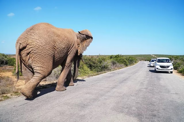 20 Best Things to Do in South Africa