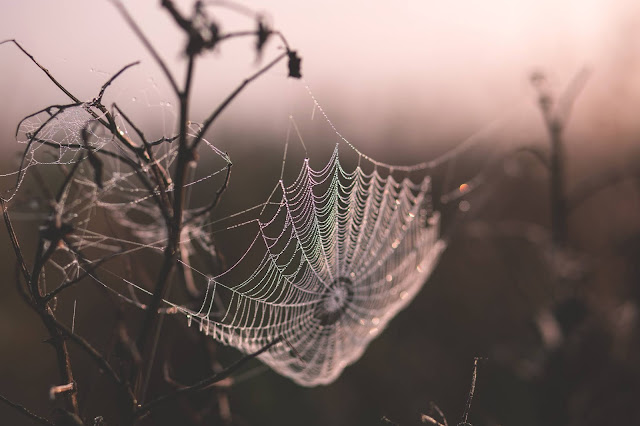 A delicate spiderweb hung with iridescent dew