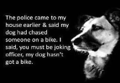 dog chase