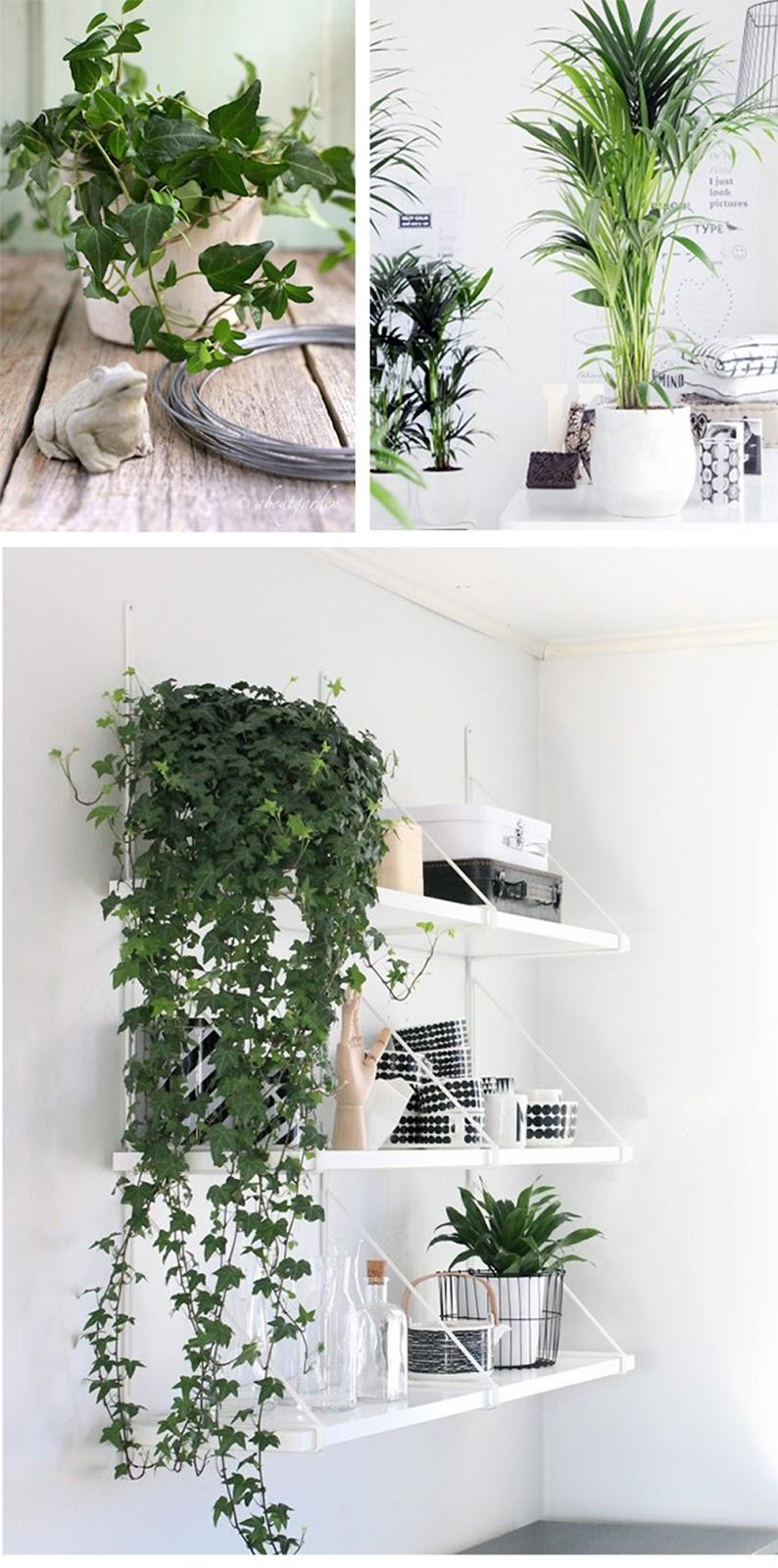piante da appartamento quando c'è poca luce