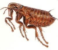 Pest Control Newcastle