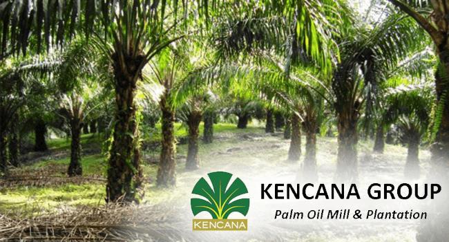 Lowongan Kerja Kalimantan - Kebun Sawit Kencana Agri