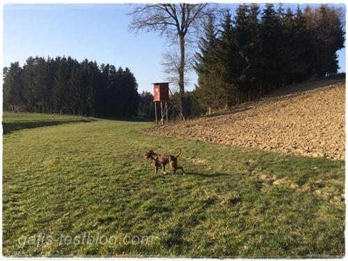 Spaziergang zum Frühlingsbeginn