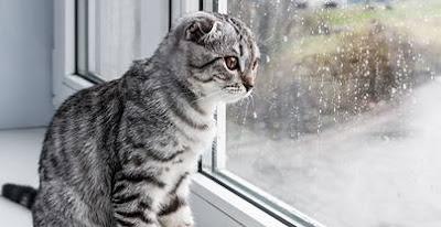 soledad-separacion-causa-ansiedad-algunos-gatos