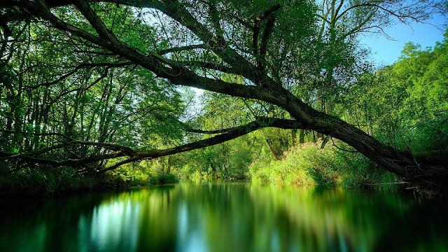 HD wallpaper met donker groene rivier en een boom die over het water hangt.