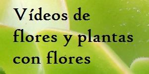 Vídeos de flores y plantas con flores