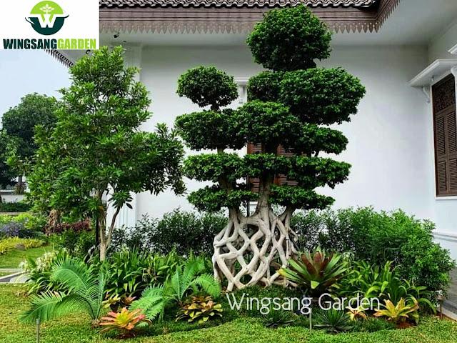 Tukang Taman Palu | Jasa Pembuatan Taman Di Palu Sulawesi Tengah