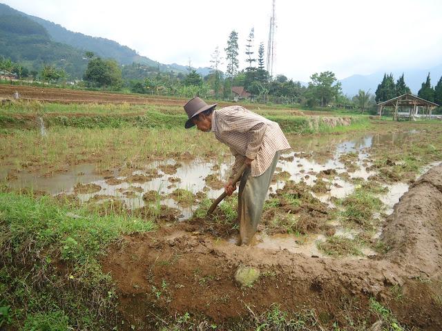 Petani Patimuan Jawa Tengah