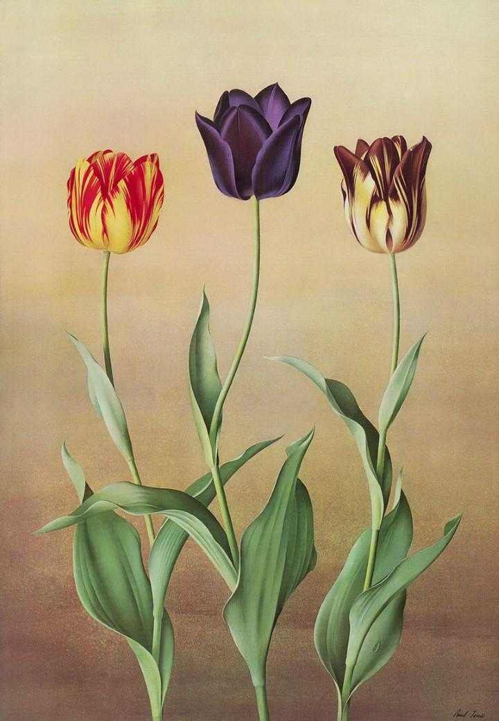 Paul Jones. Акварельные рисунки цветов 9