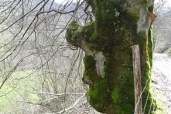 https://emanants.blogspot.com/2020/02/les-arbres-magiques-page-5.html