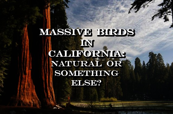 Massive Birds in California: Natural or Something Else?