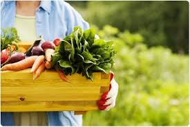 Are Organic Foods Better Than Regular Foods