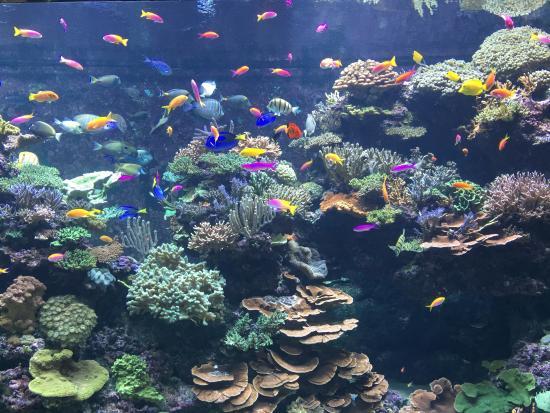 25 melhores aquários do mundo