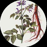 Herbal dansen dalam ICP capsule
