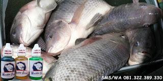 Essen Ikan Nila Khusus Kilo Gebrus