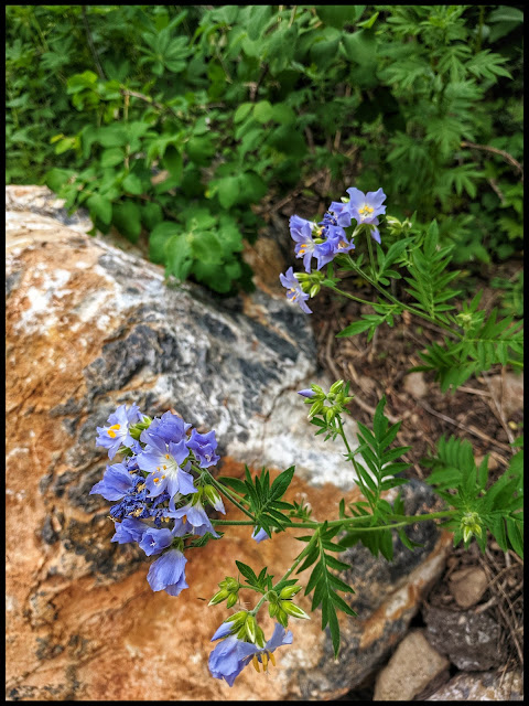 I love the contrast here of the blue flower and the orange rock.