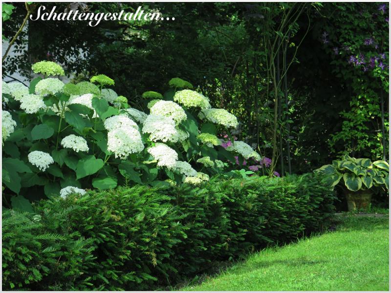 garten am engerain bitte mehr respekt vor dem schattengarten. Black Bedroom Furniture Sets. Home Design Ideas