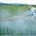 Raport ONU: PESTICIDELE NU SUNT ABSOLUT NECESARE pentru securitatea alimentară globală. Și atunci, de ce suntem otrăviți în continuare?