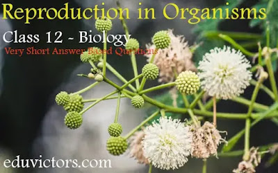 Class 12 - Biology - Reproduction in Organisms (Very Short Answer Based Questions)(#eduvictors)(#class12Biology)