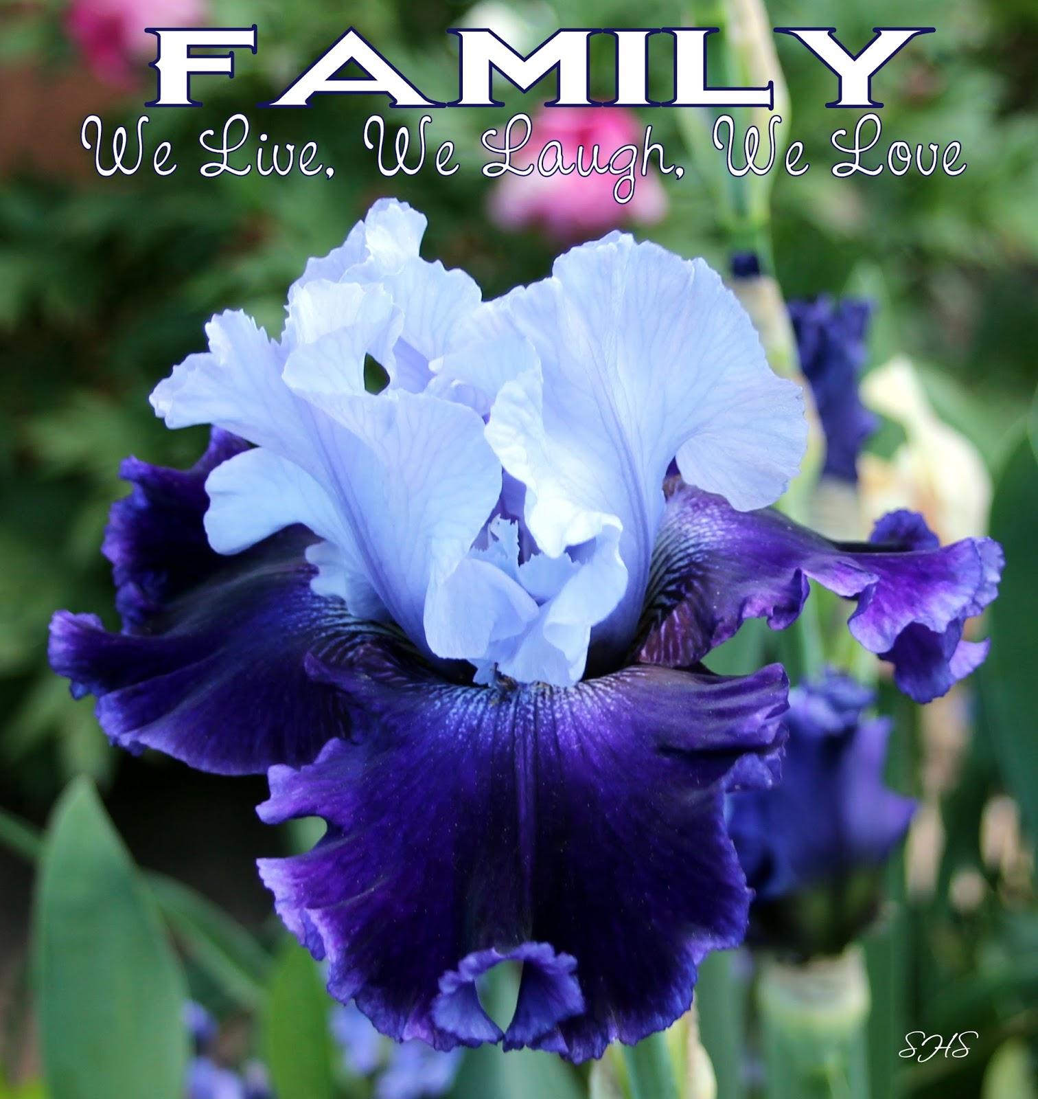 World of irises talking irises enjoy your tall bearded irises all tall bearded iris global crossing van liere 2012 izmirmasajfo
