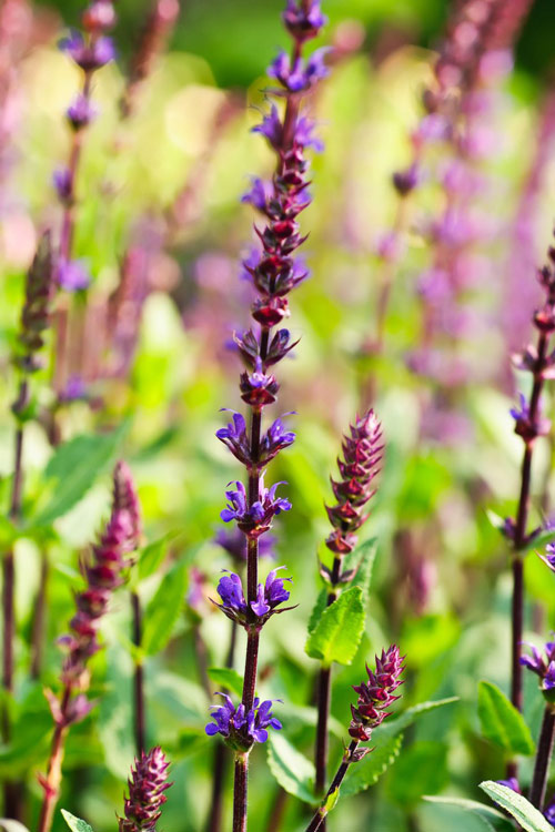 5 recommended villa garden plants that are both beautiful and drought tolerant