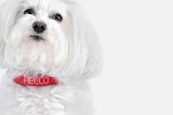 Coleira inteligente que promete ser o iphone para cachorros