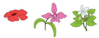 Bunga Nasional Indonesia www.simplenews.me
