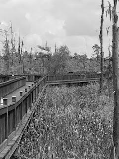 haunted swamp 2