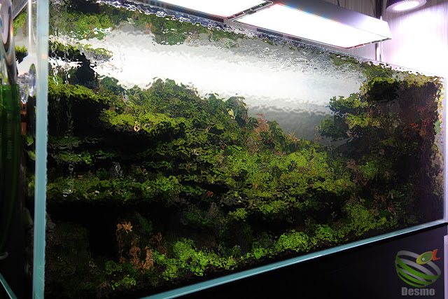 120cm水草レイアウト水槽