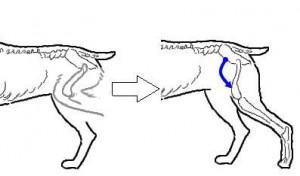 movimento da traseira dos cães