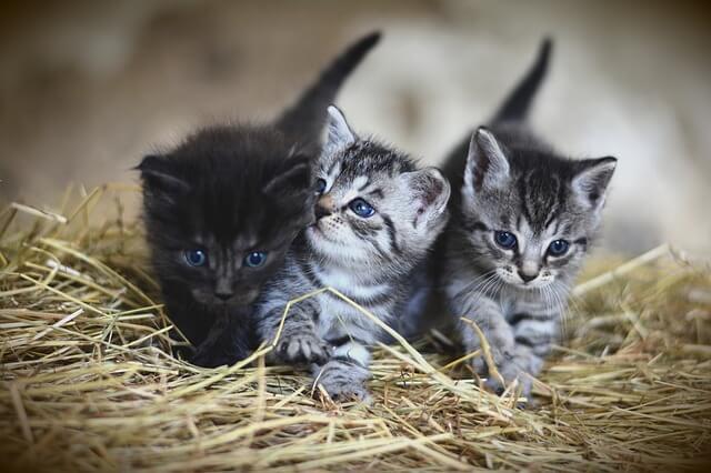 kediler-hakkında-şaşırtan-bilgiler
