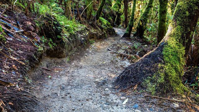 Muddy forest trail