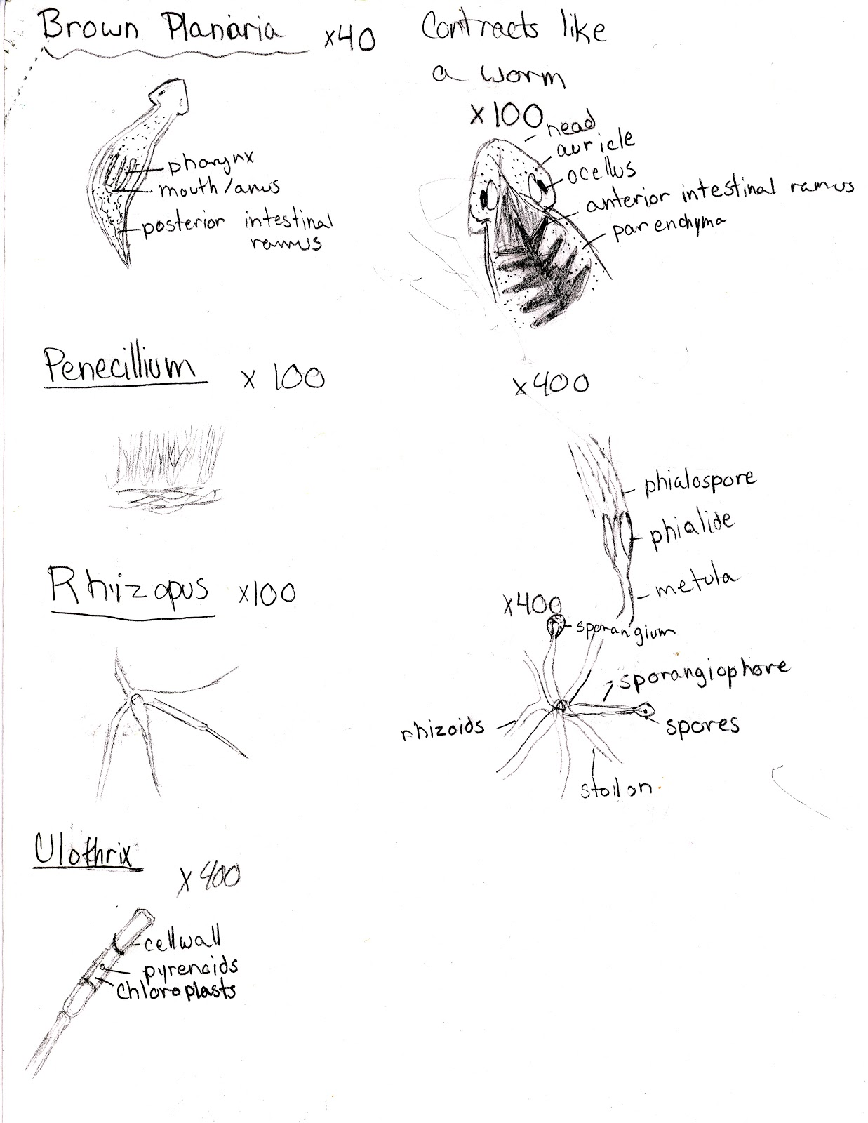 Chonteal Ramsey's Biology 20 Blog: November 2012