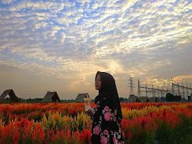 Jelajah Nusantara : Wisata taman bunga asri tejosari metro