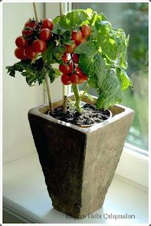 bitki yetiştirme 2