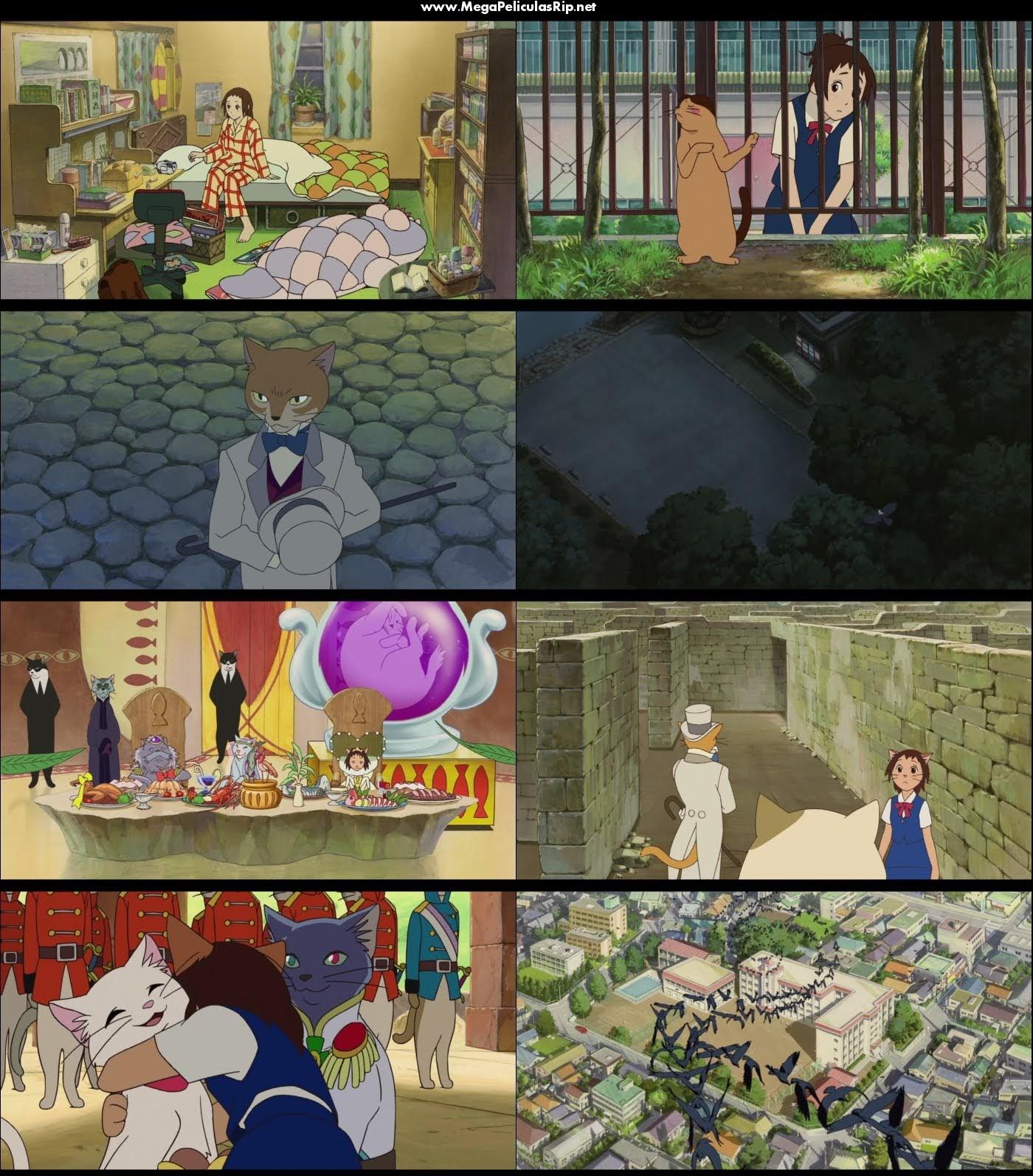 Haru En El Reino De Los Gatos 1080p Latino