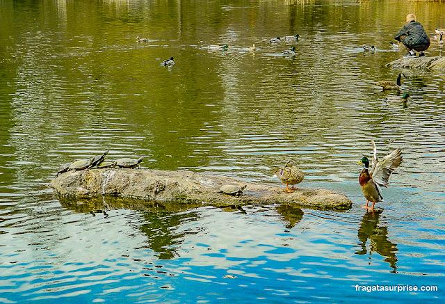 The Pond, lagoa do Central Park, Nova York