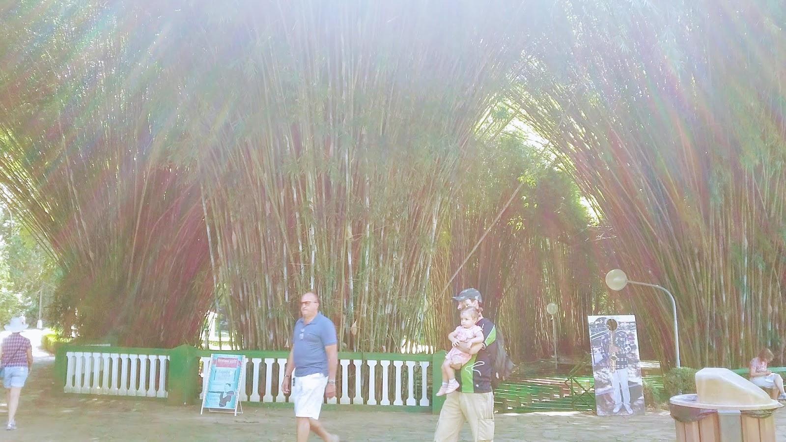 Catedral de Bambu do Parque das Águas de São Loureço