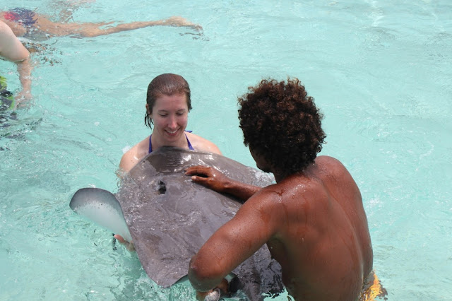 Take a Swim with Sea Creatures