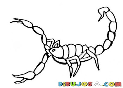 La Chachipedia Dibujos Para Colorear De Alacranes O Escorpiones
