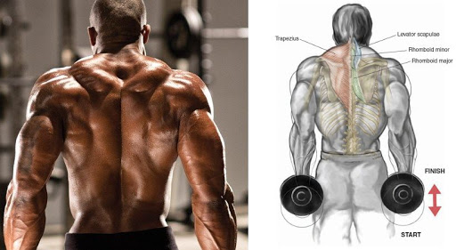 Top 5 Exercises For Massive Traps